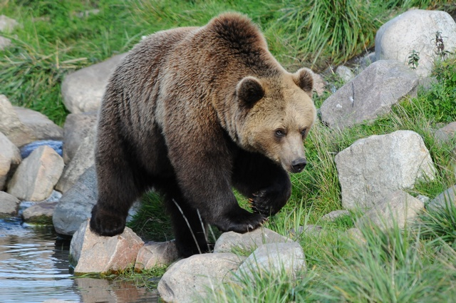 skandinavisk dyrepark rabat